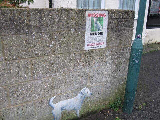 Found dog, Wolverton Road