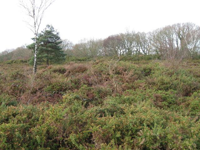 Tumulus, Barrow Hill
