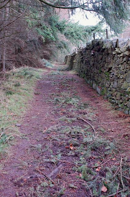 Pine strewn path to Merrybrae
