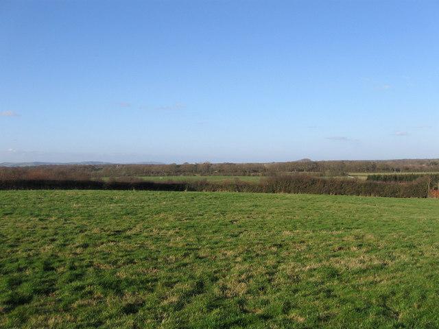 Mill Field (2)