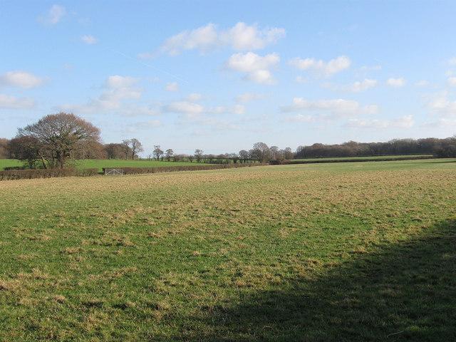 Upper Meadow/Three Acres/Upper Field