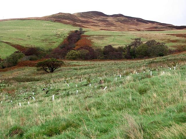 Newly planted woodland, Mid Thundergay