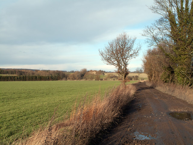 Field and farm road beside River Wear