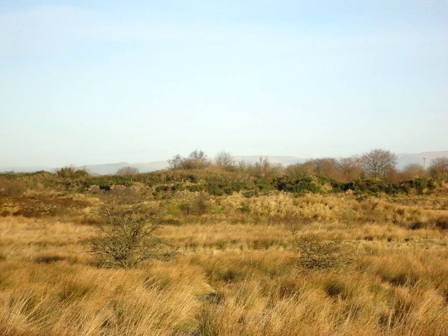 Cadgersloan, ponds and disturbed ground