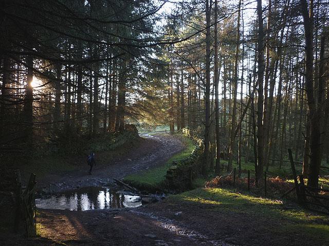 Ford in Rake Beck Wood