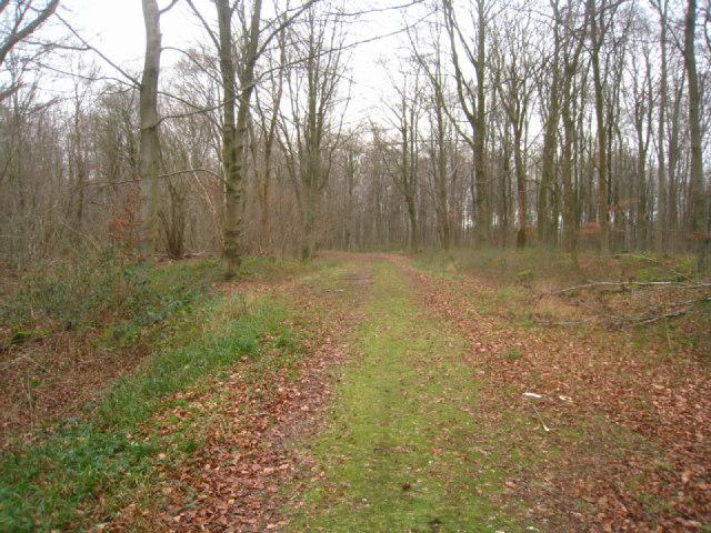 Track east of Blackwood Cottage