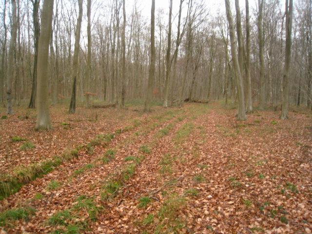 Winter inside Black Wood