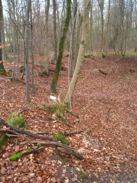 Pit in Black Wood