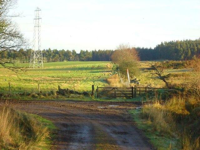 Loanfoot Plantation [13]