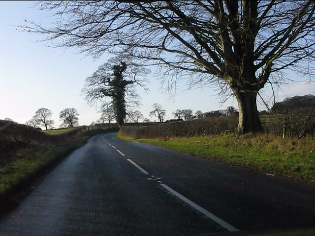Trees on Pexhill Road