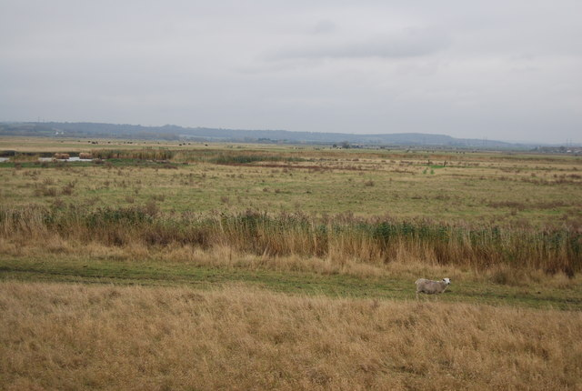 Cliff Marshes