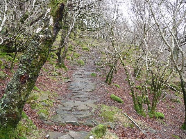 Path through woodland near Y Pincin
