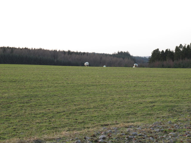 Pastures and Wheatfield Plantation (2)