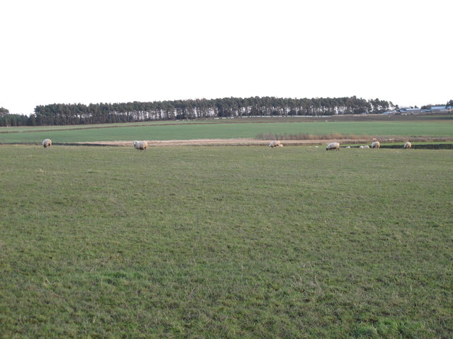 Pastures west of Henry's Plantation