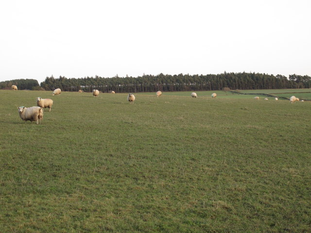 Pastures west of Henry's Plantation (2)