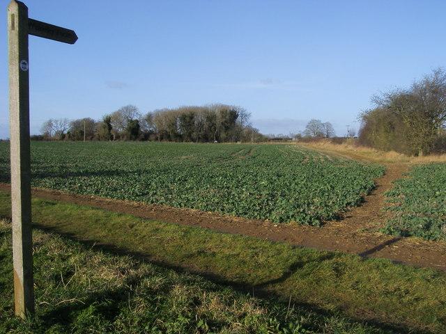 Footpath to Weaverley Furze