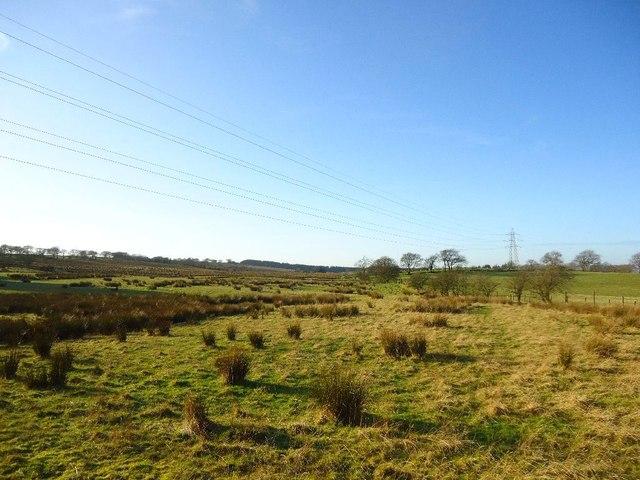 Auchengean, rough pasture
