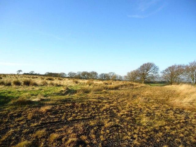 Rottenstocks, overgrown track