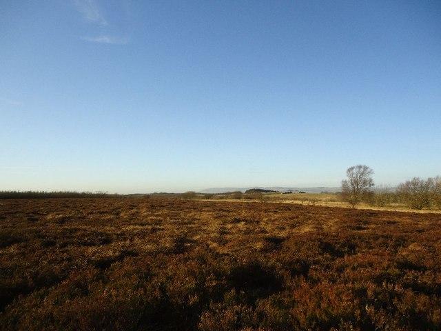 Barleyside, Darnrig Moss