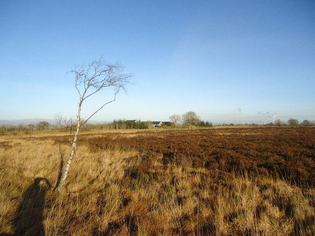 Barleyside, Darnrig Moss [2]