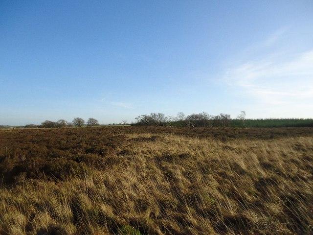 Barleyside, Darnrig Moss [3]