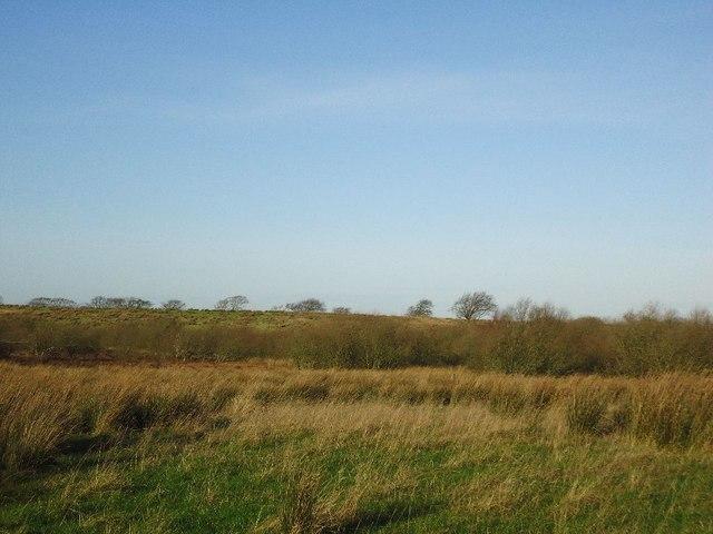 Barleyside, scrubland