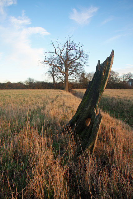 Old tree stump and ditch