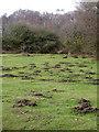 SU2001 : Molehills, Burbush by Maigheach-gheal