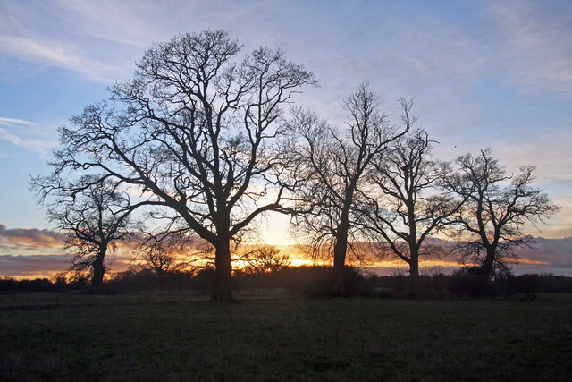 Clump of trees in the sunset