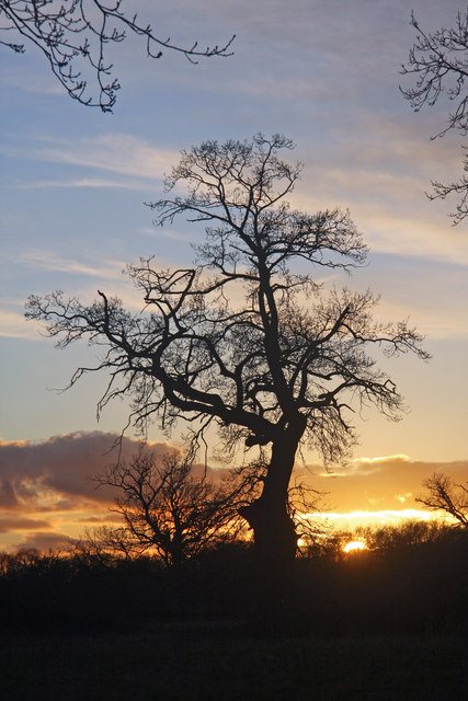 Silhouetted tree at Little Saxham