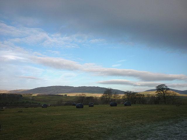 Silage bales at Birchfield