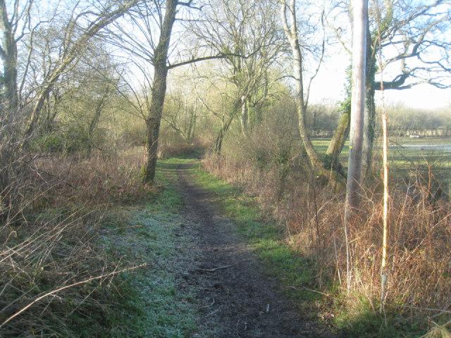 Frosty track - Odiham Common