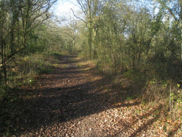 Path near Odiham Common