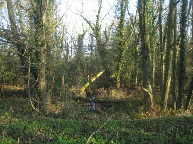 Damp woodland - Potbridge