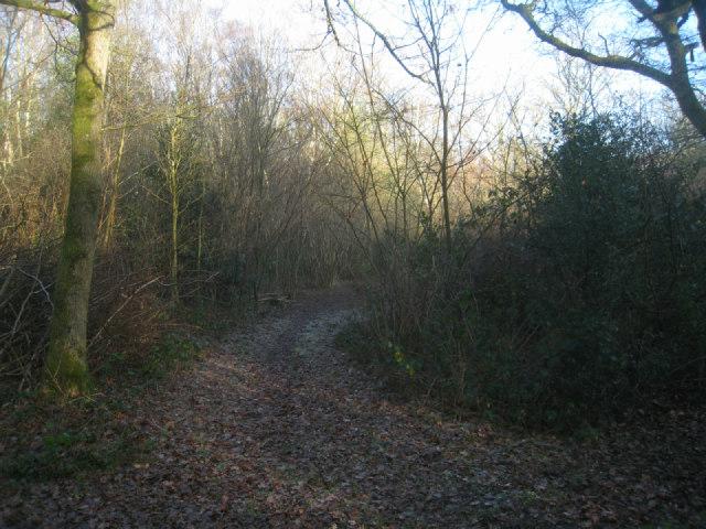 Track on Odiham Common