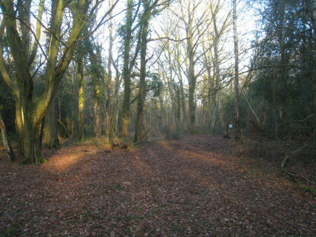 Path on Odiham Common