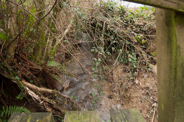 Looking downstream from a footbridge on Coney Gut near Middle Dean Farm