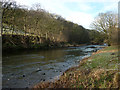 SD6295 : The River Lune, Crook of Lune Wood by Karl and Ali