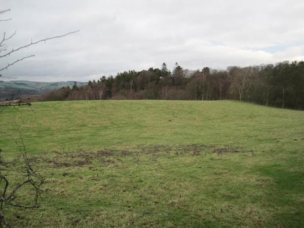 View towards Pasturehill Wood