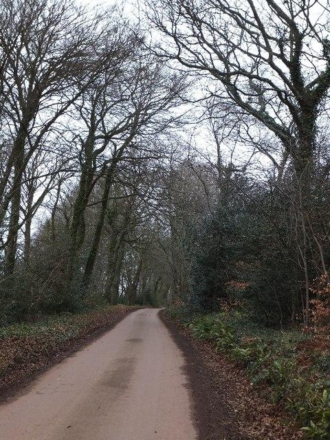 In Hillersdon Wood