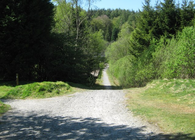 A cycle track in Kirroughtree Forest