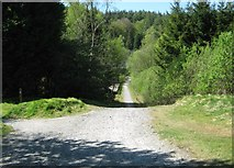 NX4564 : A cycle track in Kirroughtree Forest by Ann Cook
