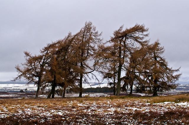 Moorland near Carim Lodge