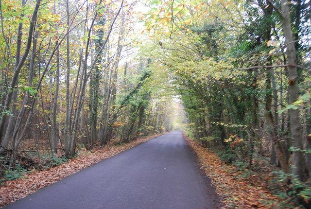 Hicks Forstal Rd in East Blean Wood