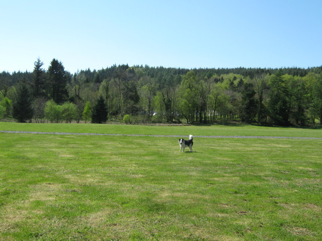 An open space in Kirroughtree Forest
