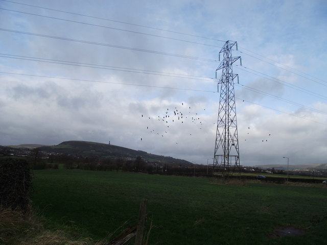 Field, pylon and crows