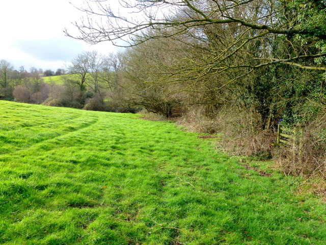 Sunny field edge