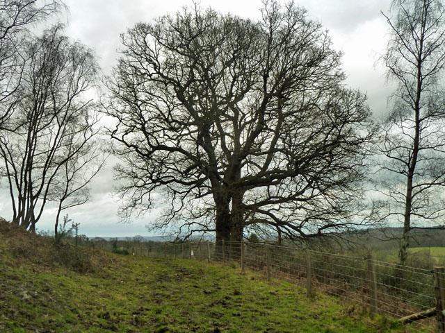 Footpath towards Honnington Farm