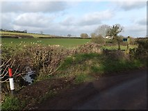 ST0007 : Footpath to Ponsford Lane by David Smith