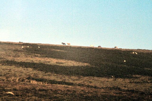 Dartmoor National Park - 1982